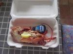 Half lobster (local) from Aberdaron