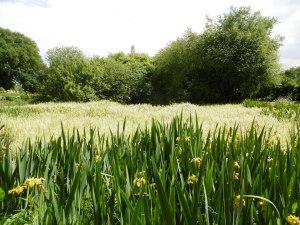 A former monastic pond