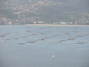 Platforms for harvesting mussels in the estuary opposite Vigo