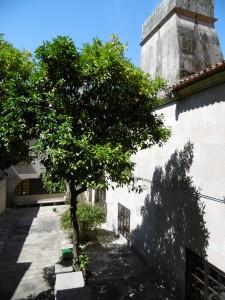 Orange tree in courtyard inside hotel