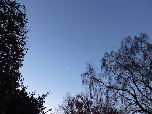 A sliver of moon over the front of our house, the trees on the right inhabit the golf course and these weeping birches are probably my favourites.